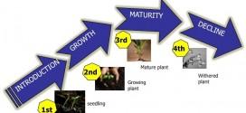 یک محصول از تولد تا افول، چه مراحلی را طی می کند؟